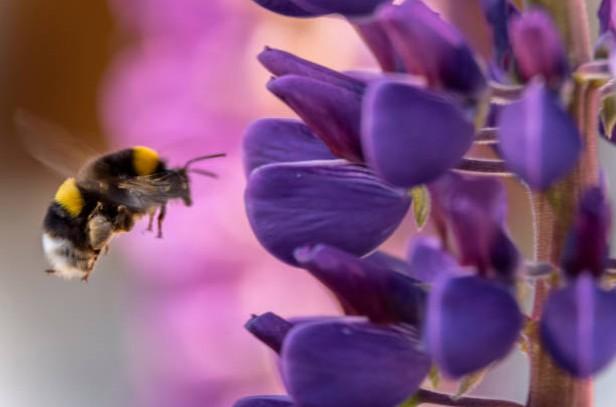 fleur-abeille-jardin