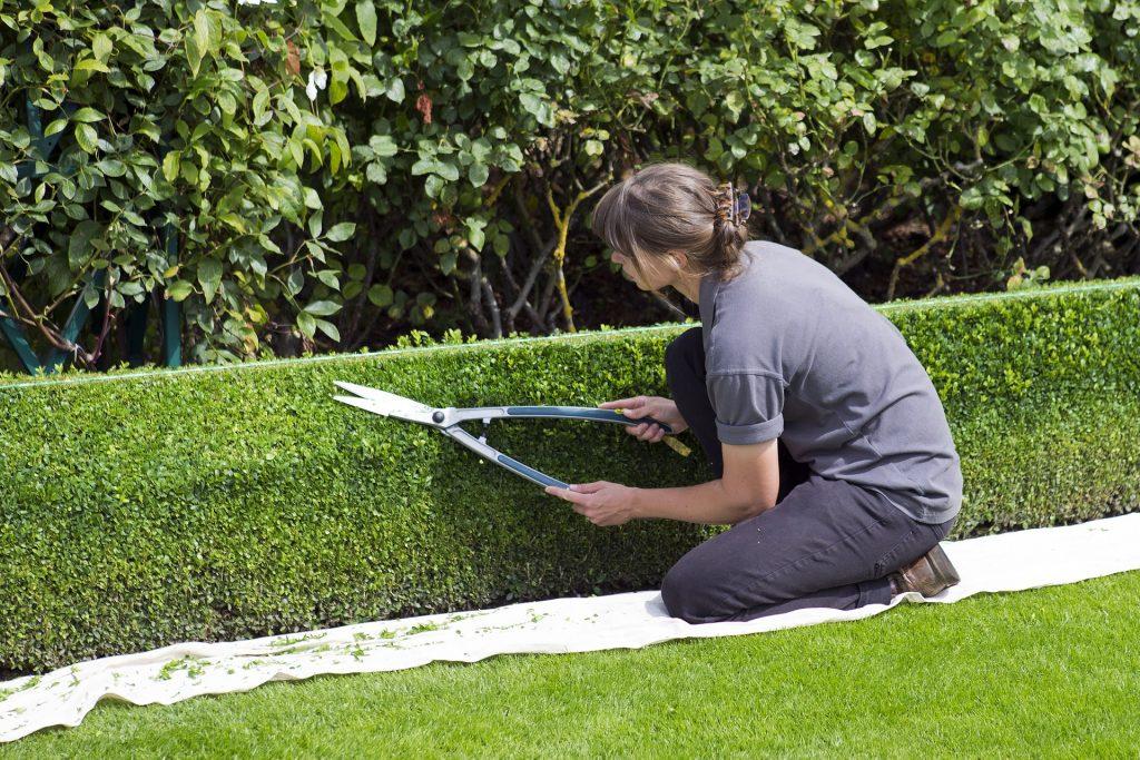 Une femme taille des haies du buis dans son jardin
